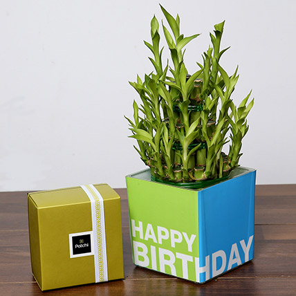 3 Layer Bamboo Plant and Patchi Chocolates For Birthday: