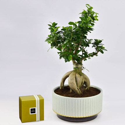 Bonsai Plant In Green Pot and Patchi Chocolates: