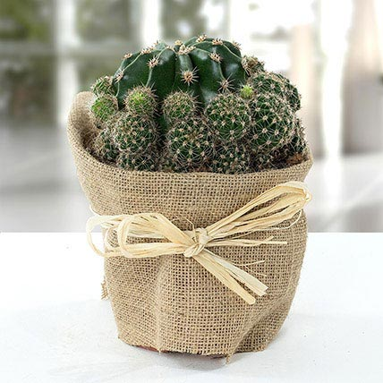 Elegant Cactus with Jute Wrapped Pot: