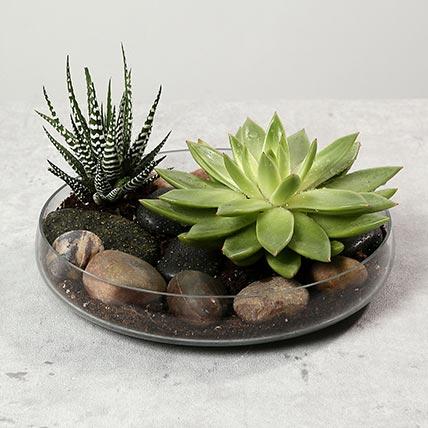 Green Echeveria and Haworthia with Natural Stones: