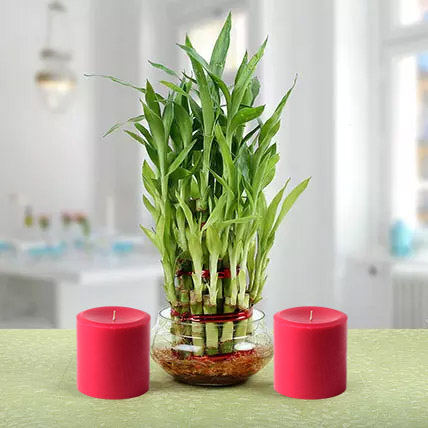 Three Layer Lucky Bamboo Plant N Candles: Indoor Plants in Dubai
