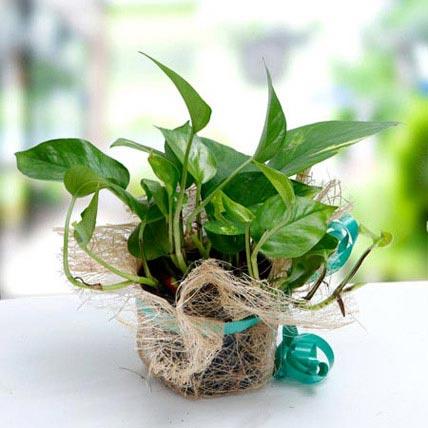 Thoughts Of U: Money Plants