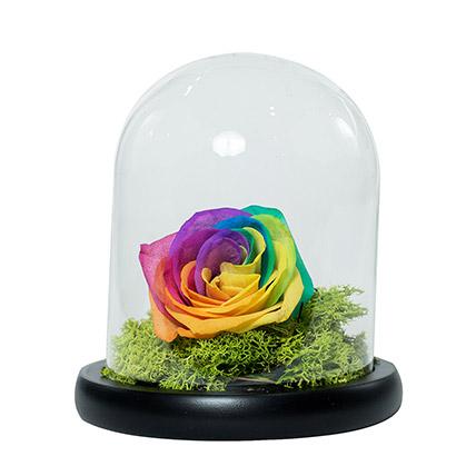 Splendid Rainbow Rose: Forever Rose Dubai