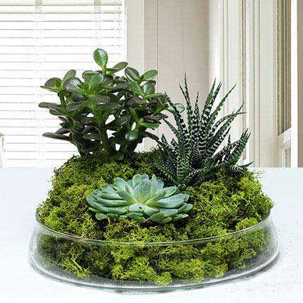 Small Glass Green Wonder: Succulent Plants