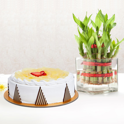 Pineapple Cake and Lucky Bamboo Combo: Gifts For Doctor's Day
