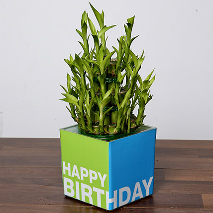 3 Layer Bamboo Plant For Birthday: