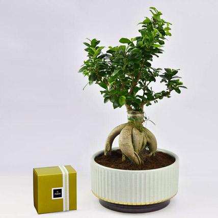 Bonsai Plant In Green Pot and Patchi Chocolates: Patchi Chocolate Dubai