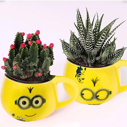 Cactus and Haworthia In Smiley Pots: