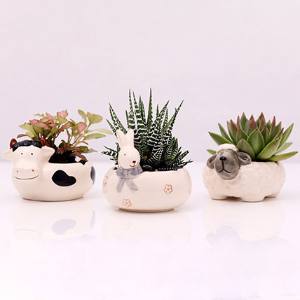 Set of 3 Plants in Animal Design Pots: