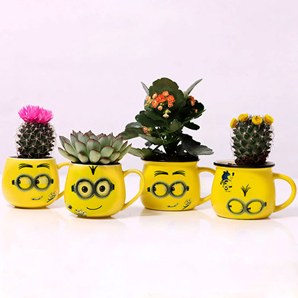 Set of 4 Plants in Emoticon Mugs: Best Flowering Plants
