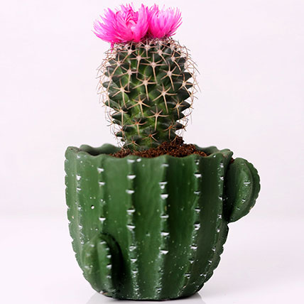 Artificial Flower Cactus in Cactus Design Pot: