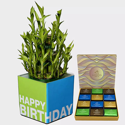 Lucky Bamboo Plant and Godiva Chocolates: Plant Combos