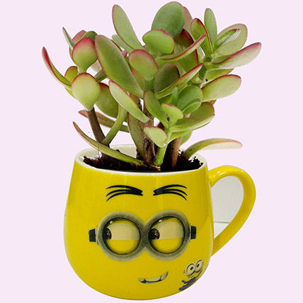 Smiley Pot of Crassula Plant: Indoor Plants in Dubai