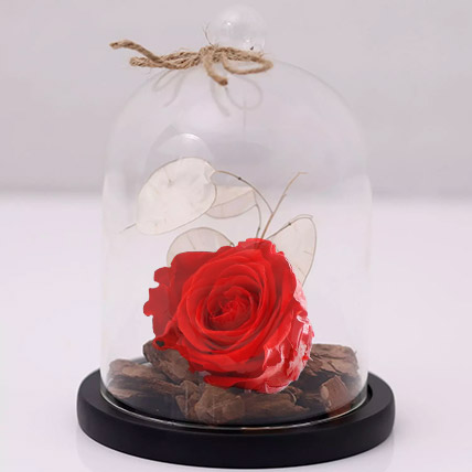 Red Forever Rose In Glass Dome: 1 Hour Gift Delivery