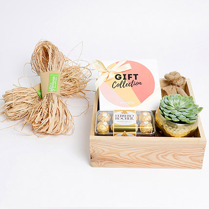 Cute Succulent & Detox Tea Gift Collection: Plant Combos