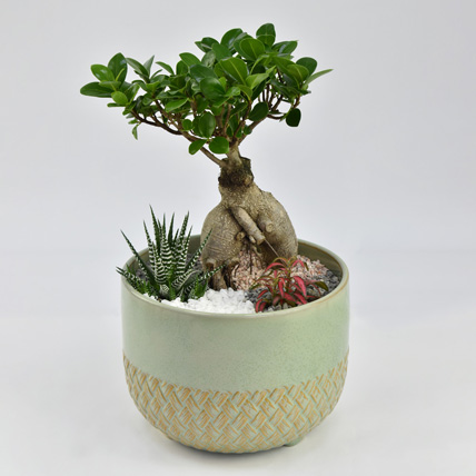 Bonsai Garden: Plants for Birthday Gift