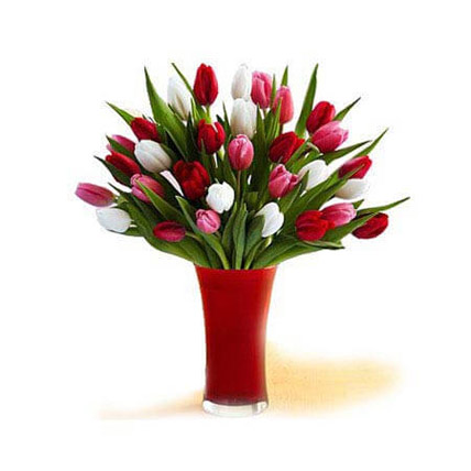 30 Red White Pink Tulips In A Glass: