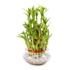 Green Gifts for Friend - Plants Online