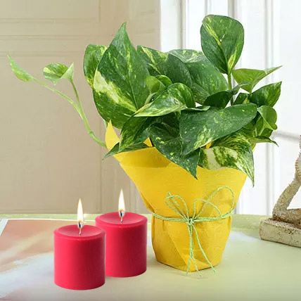 Red Candles N Money Plant