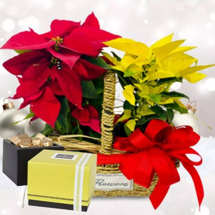 Red & Yellow Poinsettia Plant Combo