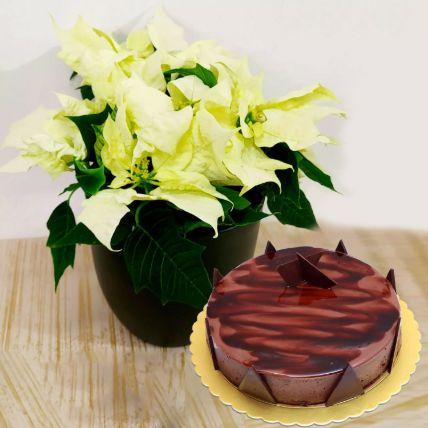 White Poinsettia Plant With Chocolate Cake